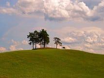 Pijnboombomen op de heuvel in Masuria (Mazury) Stock Afbeelding
