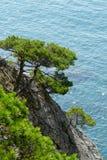 Pijnboombomen op de kustklippen op de achtergrond van het turkooise overzees op een zonnige dag stock fotografie