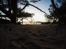 Pijnboombomen op het zand in Alghero-kust bij zonsondergang stock foto's