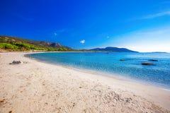 Pijnboombomen op Palombaggia-strand met azuurblauw duidelijk water en zandig strand, Corsica, Frankrijk royalty-vrije stock afbeelding