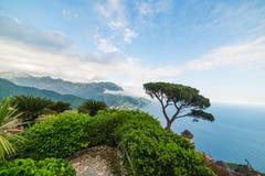 Pijnboomboom in de kleurrijke kust van Ravello royalty-vrije stock foto's