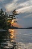 Pijnboomboom die over water, zonsondergang gouden bezinning leunen Royalty-vrije Stock Afbeeldingen