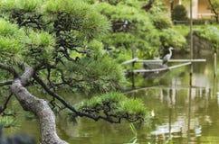 Pijnboomboom en Japanse reiger in Shinji Pond in openbaar GA royalty-vrije stock foto's