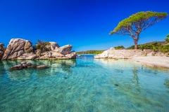 Pijnboomboom en mooie lagune op Palombaggia-strand, Corsica, Frankrijk Stock Foto's