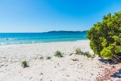 Pijnboomboom en wit zand in Maria Pia-strand stock foto's