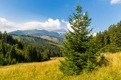 Pijnboomboom op bergweide in Tatras royalty-vrije stock foto's