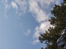 Pijnboomboom op blauwe hemel met wolken Royalty-vrije Stock Fotografie