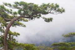 Pijnboomboom op de bovenkant van berg Stock Fotografie