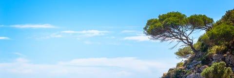 Pijnboomboom op een rots op blauwe hemelachtergrond, panoramisch mediterraan landschap in Menorca de Balearen Spanje stock afbeelding