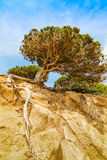 Pijnboomboom op een rots in Sardinige royalty-vrije stock afbeelding