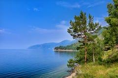 Pijnboomboom op rand van steile bank van Meer Baikal Royalty-vrije Stock Afbeeldingen
