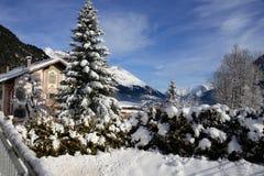 Pijnboomboom in sneeuw met bergen in bach voralberg Oostenrijk wordt behandeld dat Royalty-vrije Stock Afbeelding