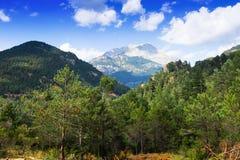 Pijnboombos bij bergen Stock Afbeelding