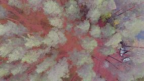 Pijnboombos dat met lichte vorst, somber de herfstlandschap wordt behandeld stock videobeelden