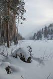 Pijnboombos dichtbij de bevroren rivier stock afbeelding