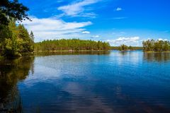 Pijnboombos dichtbij het meer Stock Foto's