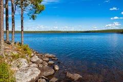 Pijnboombos dichtbij het meer Stock Afbeeldingen