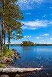Pijnboombos dichtbij het meer Royalty-vrije Stock Afbeelding