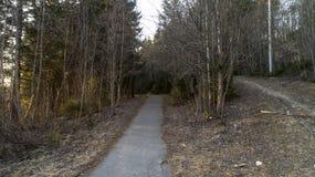 Pijnboombos in het begin van de lente Bos na de winterlandschap stock afbeeldingen