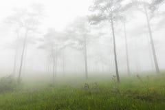 Pijnboombos, het nationale park van Phu Soi Dao, Thailand Stock Afbeeldingen