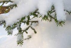 Pijnboombos met sneeuw in de koude winter wordt behandeld die royalty-vrije stock fotografie