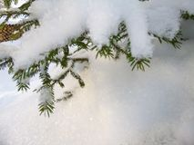 Pijnboombos met sneeuw in de koude winter wordt behandeld die Royalty-vrije Stock Afbeelding