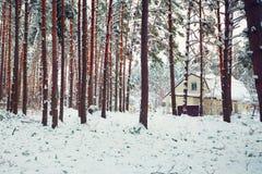 Pijnboombos met sneeuw wordt behandeld die Royalty-vrije Stock Afbeelding