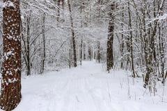 Pijnboombos met sneeuw wordt behandeld die Stock Afbeeldingen