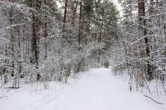 Pijnboombos met sneeuw wordt behandeld die Royalty-vrije Stock Foto