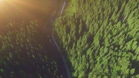 Pijnboombos van hierboven, dalingsseizoen, bosweg stock footage