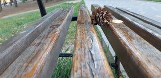 Pijnboombuilen die op een houten bank liggen stock afbeelding