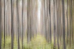 Pijnboomhout Royalty-vrije Stock Foto's