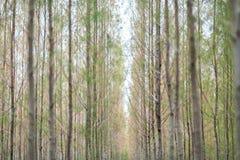Pijnboomhout Royalty-vrije Stock Fotografie