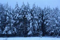 Pijnboomhout in de winter. ????????? ?? ? Royalty-vrije Stock Foto