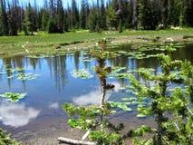 Pijnboomjong boompje met Achtergrond van een Hoge Bergvijver royalty-vrije stock foto's