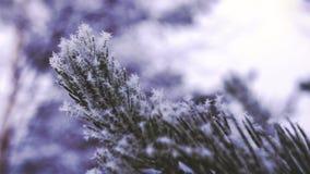 Pijnboomnaalden met Sneeuw en Ijs - Close-up Langzame Motie Stock Fotografie
