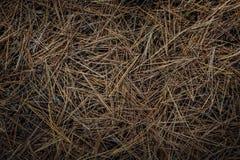 Pijnboomnaalden op bosvloer Stock Foto