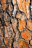 Pijnboomschors Stock Afbeelding