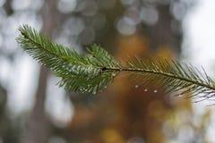 pijnboomtak in november-de herfstbos als abstract kunstwerk met B Stock Fotografie