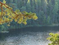 Pijnboomtak op de achtergrond van het meer en de kust Stock Afbeeldingen
