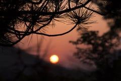 Pijnboomtakken op een achtergrond van een zonsondergang Stock Fotografie