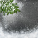 Pijnboomtakken in sneeuw De achtergrond van de Kerstmisvakantie Stock Foto's