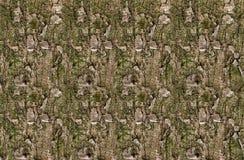 Pijnboomtextuur met groene mos natuurlijke eindeloze achtergrond royalty-vrije stock afbeelding