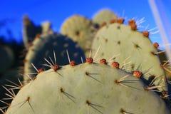 Pik och blomma på en kaktus Arkivbild