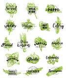 Pikantność i ziele ikony z literowaniem ilustracji
