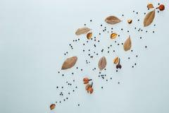 Pikantność skład Podpalany liść i pieprzowe dekoracje na błękitnym tle Mieszkanie nieatutowy, odgórny widok, kopii przestrzeń zdjęcie stock