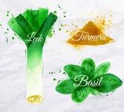 Pikantność ziele akwareli leeks, basil, turmeric Obrazy Royalty Free