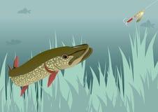 Pike и Baubles Стоковая Фотография RF
