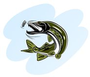 Pike attack bait. Vector illustration of a pike attacking the bait Royalty Free Stock Photo