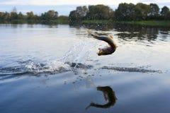 Pike auf dem Hakenherausspringen des Wassers Lizenzfreie Stockfotos